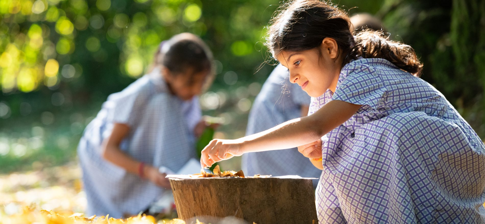 A school girl picking up leaves to add to a tree stump